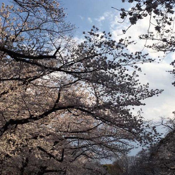 日本美を守り伝える TSUMUGU 紡ぐプロジェクト